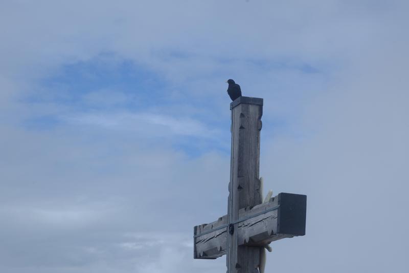 Corbeau un Nid d'Aigle