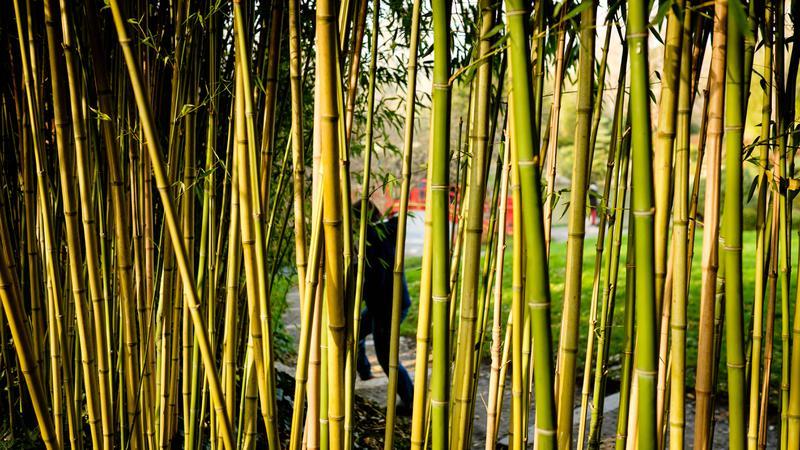 rideau-de-bambou
